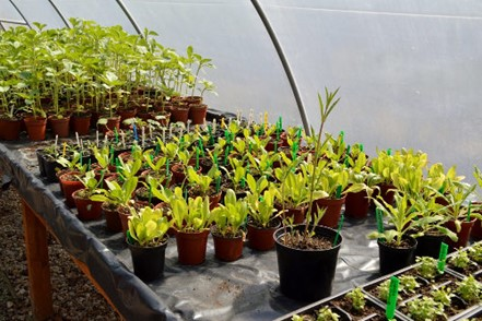 Plants growing in a polytunnel at Elm Tree Farm